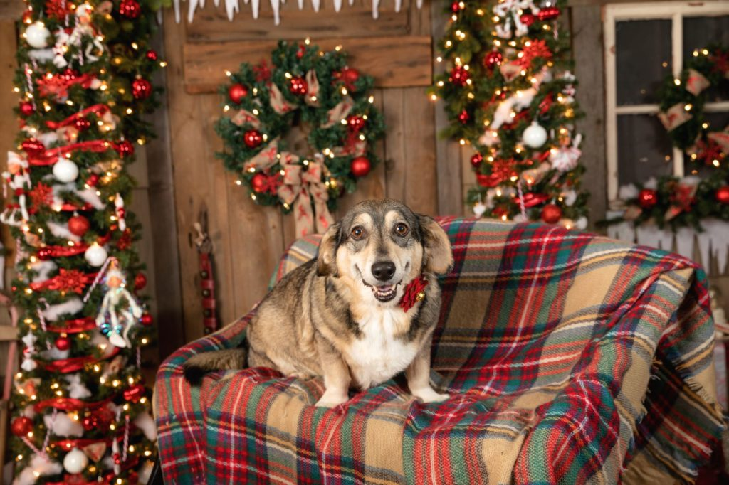 holiday-photos-for-pets-newington-ct