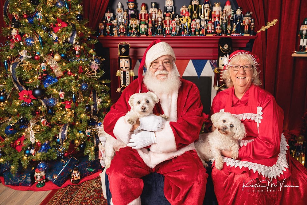Christmas Pet Photos for the CT Humane Society by The Flash Lady Photography