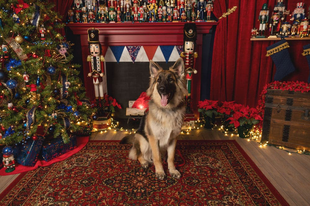 -9Araujo-Christmas-Pet-Session-Photos-2019